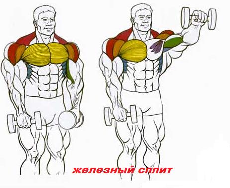 тренировка плеч махами гантелей вперед рисунок.
