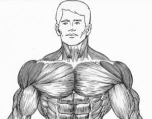 Результат тренировки плеч гантелями рисунок.
