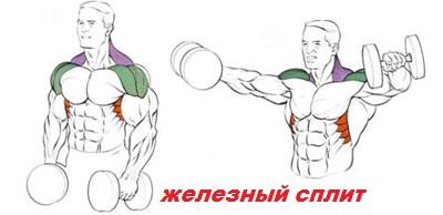 Тренировка плеч махами гантелями в стороны фото.