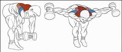Упражнение для тренировки плеч махи гантелями в наклоне.