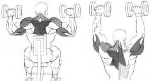 Тренировка ноги плечи