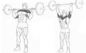 Жим штанги стоя базовое упражнение на плечи рисунок.