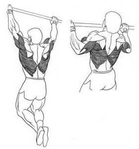 Подтягивания базовое упражнение для мышц спины рисунок