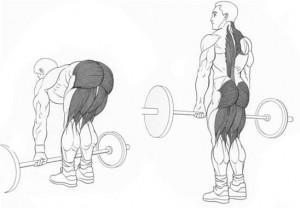 Становая тяга заменяет все упражнения для мышц спины рисунок.