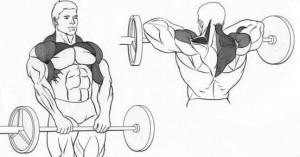 Техника выполнения упражнения на плечи тяга штанги к подбородку картинка.