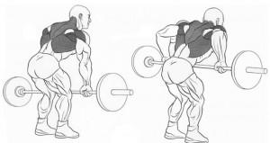 Выполнение упражнения для мышц спины тяга штанги в наклоне рисунок.