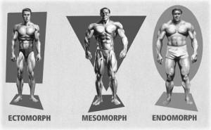 типы телосложения картинка