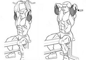Французский жим сидя хорошее упражнение на трицепс рисунок