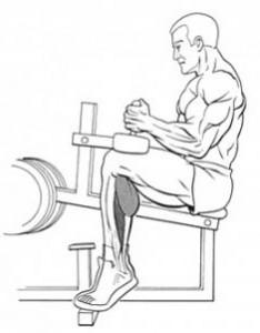 Подъемы на носки сидя в тренажере рисунок
