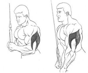 Разгибания рук на блоке изолированное упражнение на трицепс рисунок