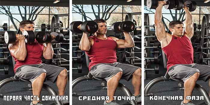 Работа мышц в жиме Арнольда